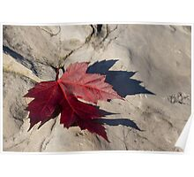 Oh Canada Maple Leaf Poster