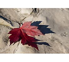 Oh Canada Maple Leaf Photographic Print