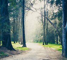 A Walk in the Woods by yolanda