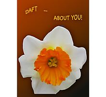 ***SAY IT WITH DAFFODILS! Photographic Print