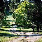 0288  Jenny's Garden by Hazel Hogarth