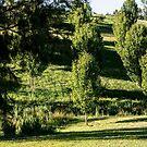 0289  Jenny's Garden by Hazel Hogarth