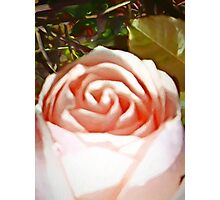 A Pale Pink Rosebud Photographic Print