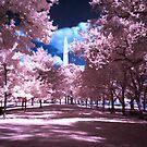 Infrared Colors by Bernai Velarde