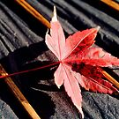 japanese maple leaf on parasol by Janine Paris