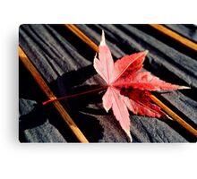 japanese maple leaf on parasol Canvas Print