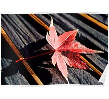 japanese maple leaf on parasol Poster