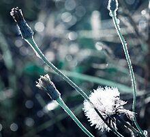 Sunlit from Heaven by Linda Lees