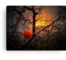 The Apple Glow Canvas Print