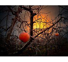 The Apple Glow Photographic Print