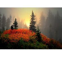 The Reds Are Here  ~ Fall Colors ~ Photographic Print