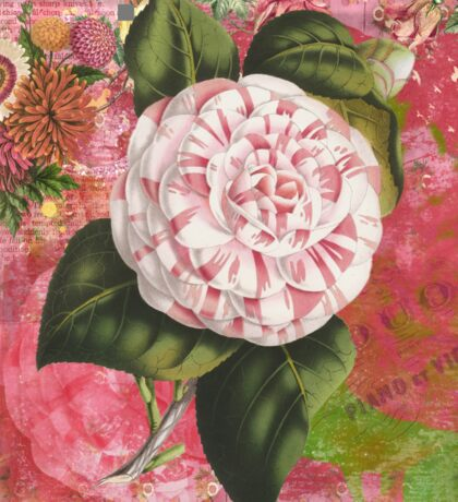 Vintage Camellia Collage Sticker