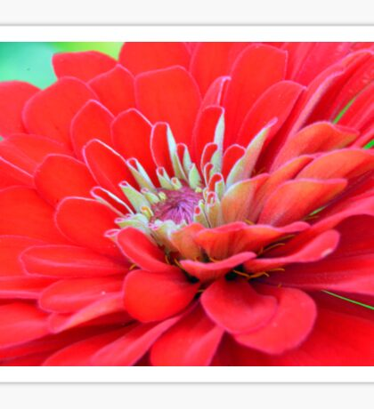 Dahlia Petals Sticker