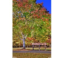 Ninety Six National Historic Site Bench In The Fall Photographic Print