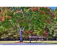 Ninety Six National Historic Site Bench In Autumn  Photographic Print