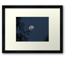 Waxing Gibbous Moon Through the Gum Tree Framed Print