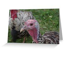 Steve, the Narragansett Turkey Tom Greeting Card