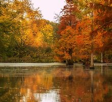 Rombergpark in Autumn by Brian  Dwyer