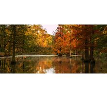 Rombergpark in Autumn Photographic Print