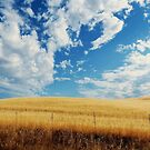 For Amber Waves Of Grain - Yolo County, CA by Rebel Kreklow