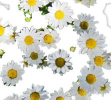Riot of Spring Flowers tee Sticker