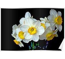 Daffodils In a Vase Poster