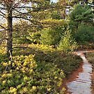 Trees and Path by Graphxpro