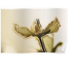 Essence Of A Christmas Rose Poster
