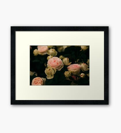 Korean Roses Framed Print
