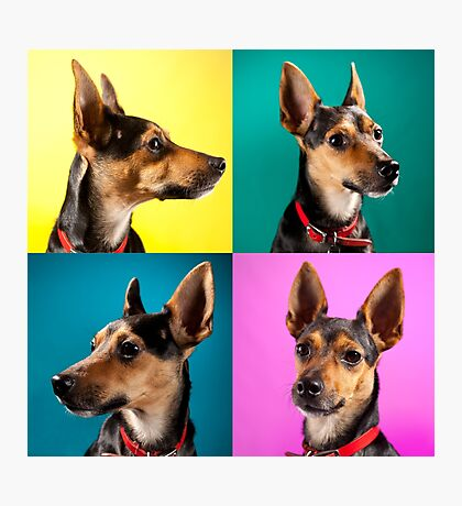 Dora Pinscher Dog Photographic Print