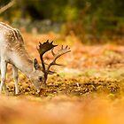 Stag Eating by Mike Garner
