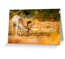 Stag Eating Greeting Card
