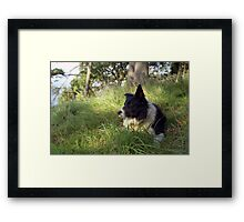 """Dogs are our link to Paradise"" Framed Print"