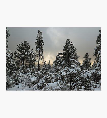 Idyllwild Nature Center, Idyllwild, California Photographic Print
