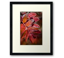 Mountain Ash In Red Framed Print