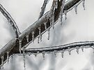 Icy Branch by FrankieCat