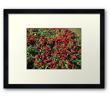 Bed of Reds Framed Print