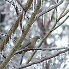 Mourning Dove by FrankieCat