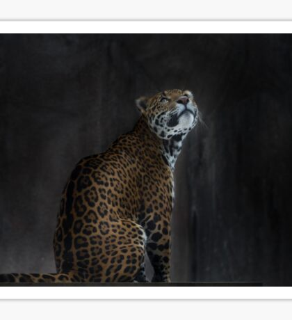 The Curious Jaguar Sticker