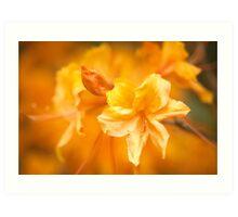 The Colour Orange - Azalea Art Print