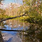 Great Swamp Patterson New York by Nancy Rohrig