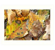 Nature's fall art Art Print
