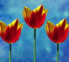 Painted Tulip Triplets by SRowe Art