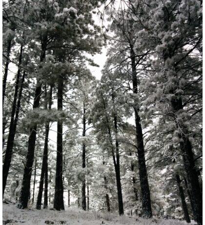 snowy forest Sticker