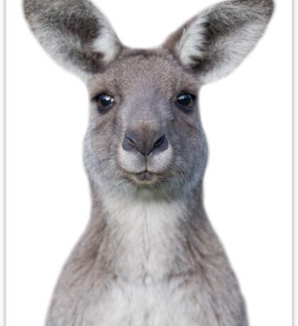 Cute baby kangaroo Sticker