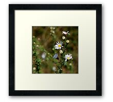 Everglades Flowers Framed Print