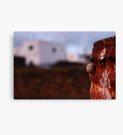 Snail in the evening Canvas Print