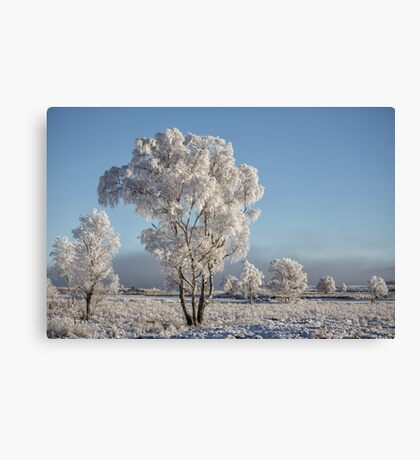 Frosting for Trees, Rannoch Moor Canvas Print