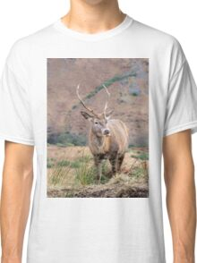 Stag in Glen Etive Classic T-Shirt