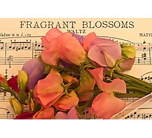 Fragrant Blossoms Photographic Print